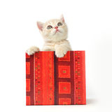 Kat in giftdoos royalty-vrije stock fotografie
