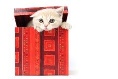 Kat in giftdoos Royalty-vrije Stock Afbeeldingen