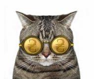 Kat in gouden hryvniaglazen royalty-vrije stock fotografie