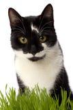 Kat in gras Stock Afbeeldingen