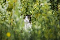 Kat in gras royalty-vrije stock foto's