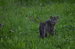 Kat in Gras Royalty-vrije Stock Foto