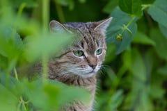 Kat in Gras Royalty-vrije Stock Afbeeldingen