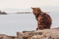 Kat in Griekenland Stock Foto's
