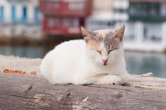 Kat in Griekenland Royalty-vrije Stock Foto's