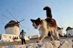 Kat in Griekenland royalty-vrije stock afbeeldingen