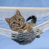 Kat in hangmat Stock Foto