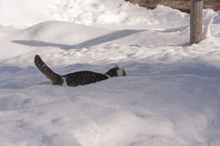 Kat in het de winterlandschap Royalty-vrije Stock Foto