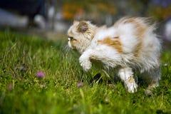 Kat in het gras Royalty-vrije Stock Afbeeldingen