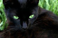 Kat in het gras Stock Afbeeldingen