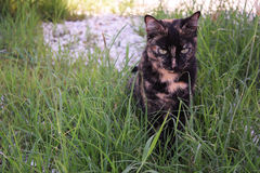 Kat in het gras Stock Foto