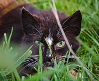 Kat in het gras wordt verborgen dat Stock Foto's
