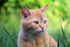 Kat in het groene gras Stock Afbeeldingen