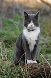 Kat in het hout Stock Afbeelding