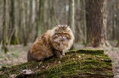 Kat in het hout royalty-vrije stock foto's