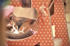 Kat het ontspannen op boomflatgebouw met koopflats, die hoog op de vloer slapen stock fotografie
