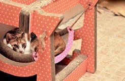 Kat het ontspannen op boomflatgebouw met koopflats, die hoog op de vloer slapen stock foto's