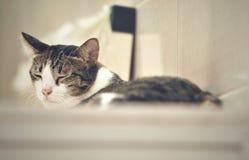 Kat het ontspannen op boomflatgebouw met koopflats, die hoog op de vloer slapen stock foto