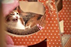 Kat het ontspannen op boomflatgebouw met koopflats, die hoog op de vloer slapen stock afbeelding