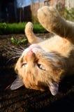 Kat in het platteland Royalty-vrije Stock Foto's