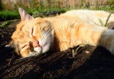 Kat in het platteland Stock Foto