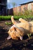 Kat in het platteland Stock Afbeeldingen