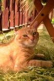 Kat in het platteland Stock Afbeelding