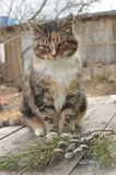 Kat in het plattelandshuisje met pussy-wilg en nette takken Royalty-vrije Stock Foto's