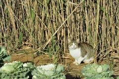 Kat in het riet Stock Afbeeldingen