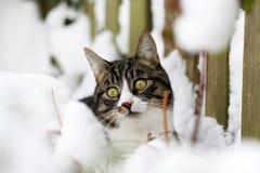Kat het spelen in de sneeuw royalty-vrije stock foto's