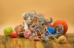 Kat het spelen met ballen van wol Stock Afbeeldingen