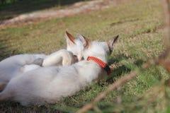 Kat het spelen met een andere kat op gras in de ochtend royalty-vrije stock foto's