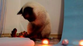Kat het spelen met Kerstmislichten stock video