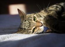 Kat het spelen op het bed Stock Afbeeldingen