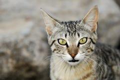Kat in het strand Stock Fotografie