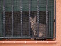 Kat in het venster Royalty-vrije Stock Afbeeldingen
