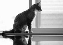 Kat in het Venster Stock Fotografie