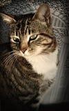 Kat in het Venster royalty-vrije stock afbeelding