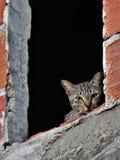 Kat in het venster van een huis in aanbouw stock fotografie