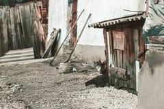 Kat het verbergen achter de loods bij oud verlaten landbouwbedrijf Royalty-vrije Stock Fotografie