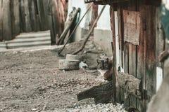 Kat het verbergen achter de loods bij oud verlaten landbouwbedrijf Stock Foto