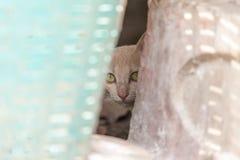 Kat het verborgen spelen Royalty-vrije Stock Foto