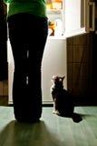Kat het voeden tijd Stock Foto