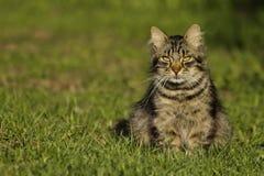 Kat in het Zonlicht royalty-vrije stock foto's