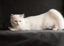 Kat in hitte stock fotografie