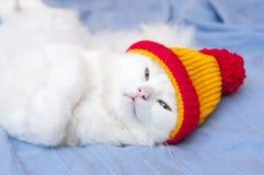 Kat in hoed Stock Afbeelding