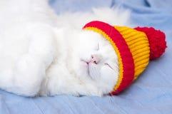 Kat in hoed stock afbeeldingen