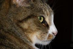 Kat Stock Image