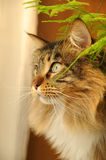 Kat in huis 3 Stock Foto's