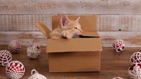 Kat in kartondoos spelen, omringd door Kerstmisdecoratie stock footage